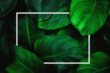 Wall Mural - tropical leaves with white frame, abstract green leaves, natural green background