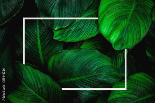 Wall mural tropical leaves with white frame, abstract green leaves, natural green background