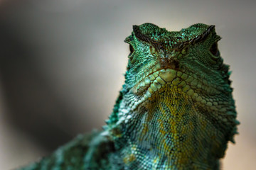 Close-Up Portrait Of A Reptile Wall mural