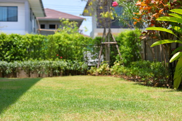 lawn landscaping garden with green grass turf and small plant decoration outside home