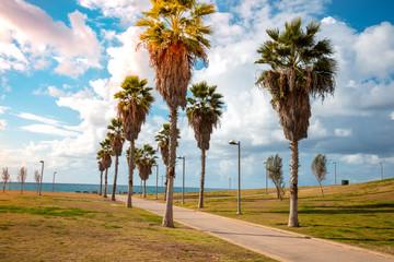 Fototapete - Promenade in Midron Yaffo Park. Harry S Truman Street. Palm alley
