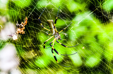 spider on web, photo as a background