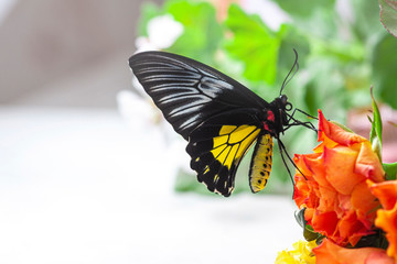 Macro photography of butterfly. Big black eyes.