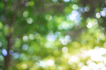 Green bokeh on nature abstract blur background green bokeh from tree Wall mural