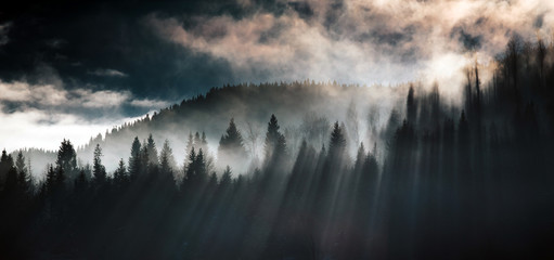 Silhouette of forest with dense fog.