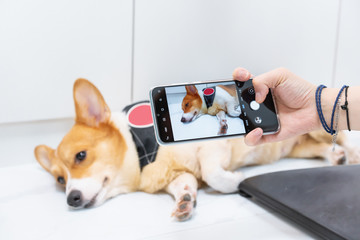 Master using a mobile phone to picture a Corgi lying on the floor