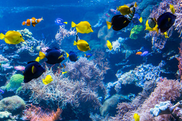 Garden Poster Coral reefs underwater coral reef landscape with colorful fish and marine life