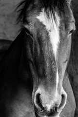 Acrylic Prints Close-Up Of Horse