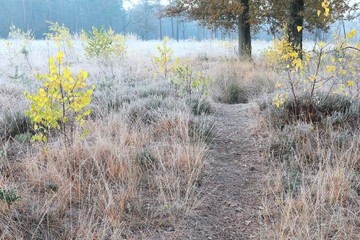 path through frosted forest meadow in autumn