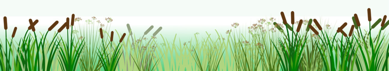 The reeds. Vector. Thickets of sedge, marsh plants and reeds. Bank of the river or lake. Horizontal background image for placement below. Isolated.