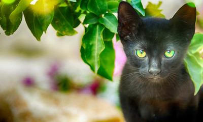 Little black kitten in the summer garden