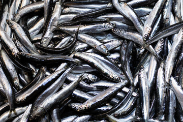 Heap of small Mediterranean anchovy fish at market. In a white box. Close up.