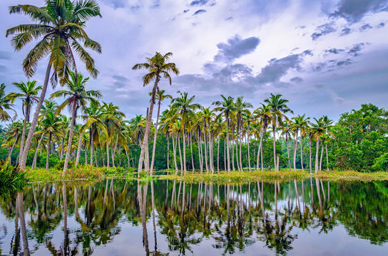 Coconut trees in the backwaters of Kerala, India with its reflection in the water.