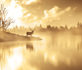 Fototapeta Scenic View Of Silhouette Deer By Lake In Foggy Weather During Sunset