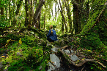Treking for the incredible jurassic forest in New Zealand on the path up to the Fox glacier, on the west coast of the South island, New Zealand