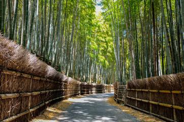 京都 竹の径