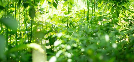 Photo sur Aluminium Vert chaux 森・緑・夏・エコロジー