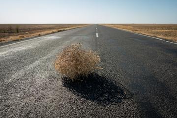 Fotomurales - Tumbleweed On Road In Desert