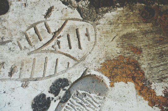 Close-Up Of Shoeprint