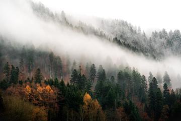 Türaufkleber Grau Verkehrs quand l'automne croise l'hiver