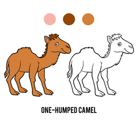 Coloring book, One-humped camel