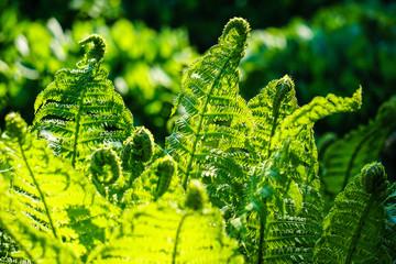 Green leaf of fern. Natural floral background in sunlight.