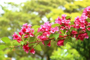 Foto op Aluminium Zwavel geel 꽃밭에서 아름답게 피어난 꽃의 풍경이다.