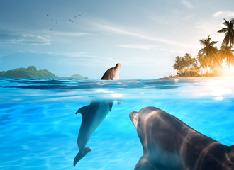 Foto op Plexiglas Dolfijn view of nice bottle nose dolphin swimming in blue crystal water