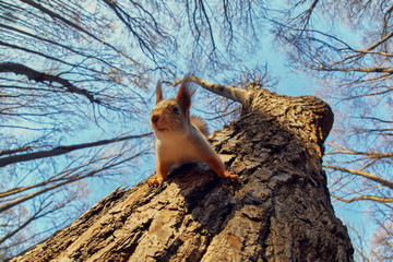 Fotorolgordijn Eekhoorn Portrait of a funny squirrel on a tree