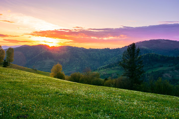 rural landscape in mountains at dusk. amazing view of carpathian countryside with fields and trees on rolling hills. herbs and flowers on the meadow. glowing purple clouds on the sky. calm weather in