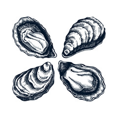 Cooked oysters illustrations. Shellfish and seafood restaurant design element. Hand drawn oyster shells sketch isolated on white background. For menu, recipes, logos, flyer or invitation.