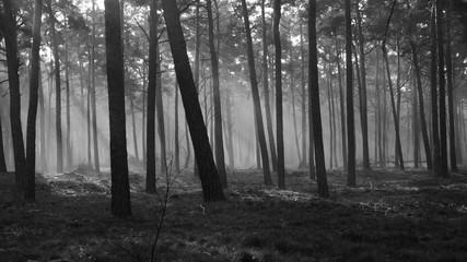 Garden Poster Forest Nebel23