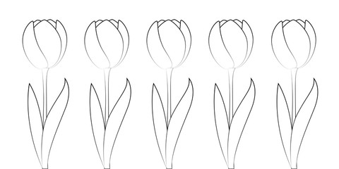 set of tulips for coloring book isolated on white background vector illustration EPS10
