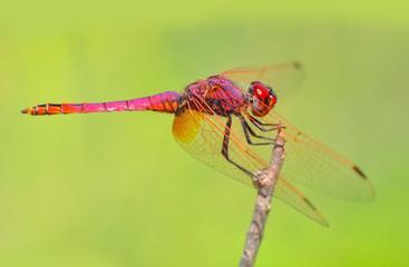 Foto op Aluminium Vlinder Macro shots, Beautiful nature scene dragonfly.
