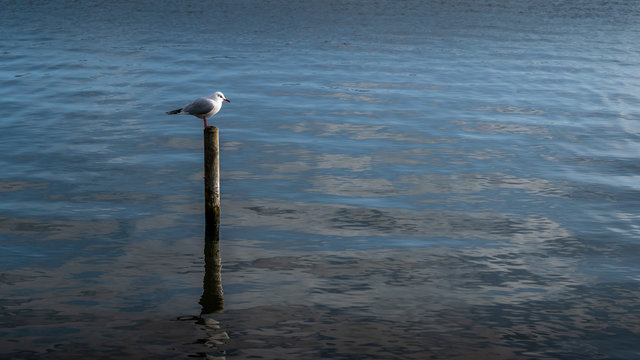 Gull on a post landscape