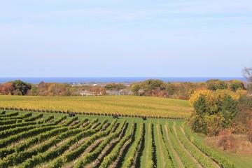 Wall Murals Vineyard vineyard in autumn