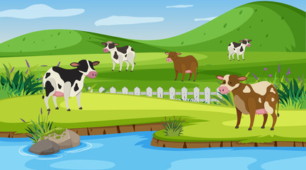 Background scene with many cows on the farm