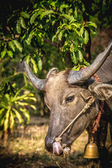 Poster Hunting Water Buffalo On Field Against Trees