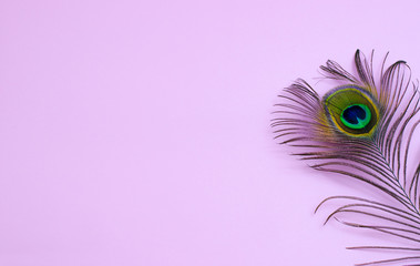 Stores à enrouleur Paon peacock feather on a pale pink background