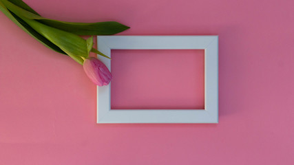 Pink tulips and white photo frame on a pink background. Flat lay, top view. Spring time background.