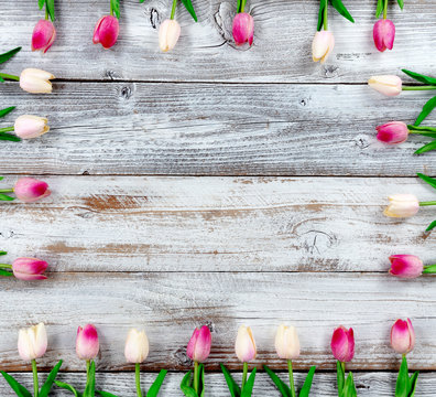 Mothers Day concept with tulip box shaped border on white rustic wood