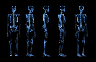 set of human skeleton x-ray