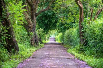 The long way of road beside big green trees like tree tunnel way. Tanzania, Africa.