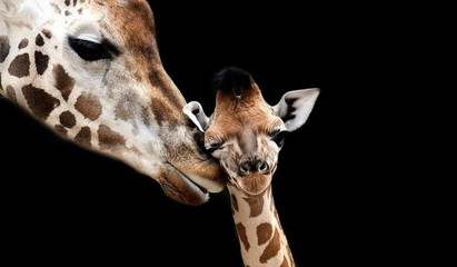 Foto auf Gartenposter Giraffe Beautiful Mom And Baby Giraffe