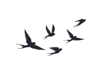 Flying birds silhouette on white background. Vector set of flock of swallows sign. Tattoo spring bird or swift birds in sky crowd fly.