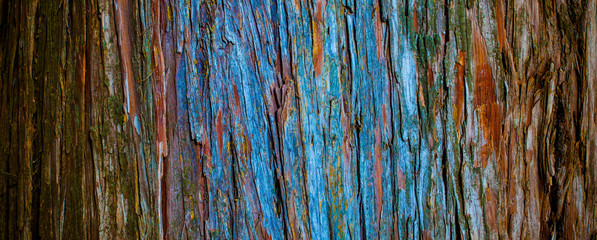 thuja tree bark in detail, texture in nature