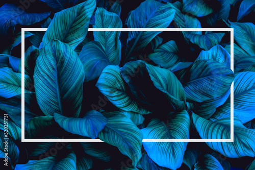 Wall mural tropical leaves with white frame, abstract green leaves nature view of leaf in garden