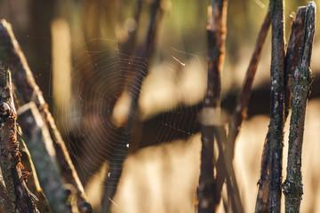 photo of spider web between wooden sticks.