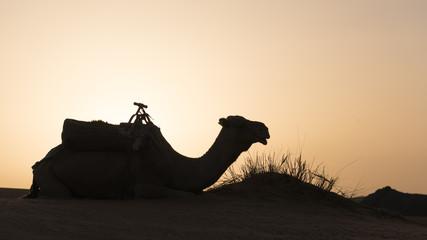 Poster Kameel Silhouette Of Camel Sitting On Desert Against Clear Sky