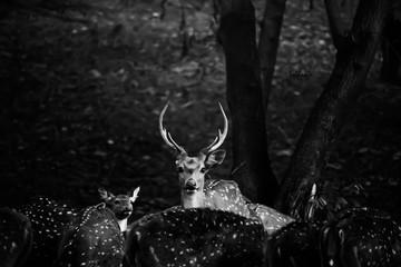 Deer Against Tree In Forest